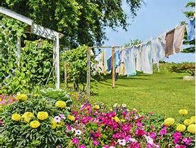 Image result for Amish flower gadens