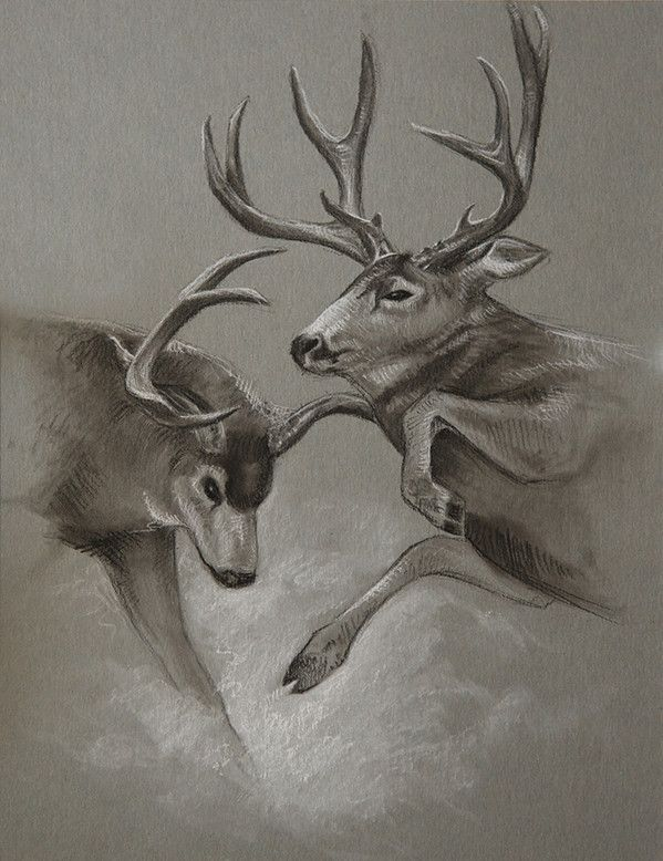 Image Result For Using Coffee To Color Antlers