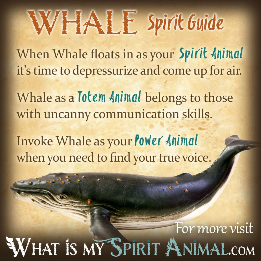 how to talk to your spirit animal