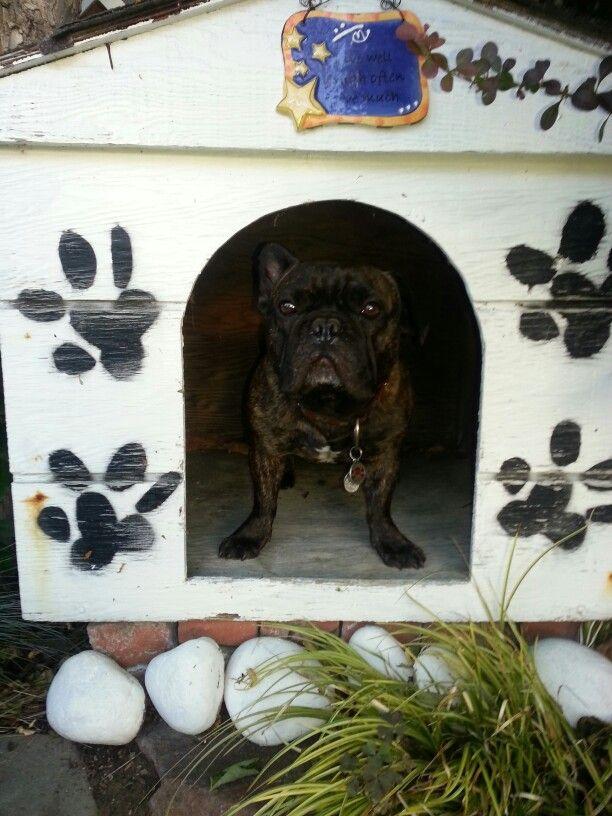 My House My Rules French Bulldog Bulldog Animals