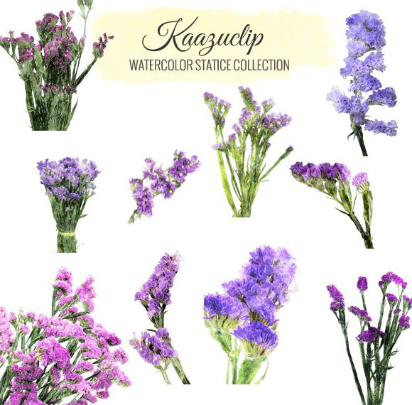 watercolor statice flower collection by kaazuclip on