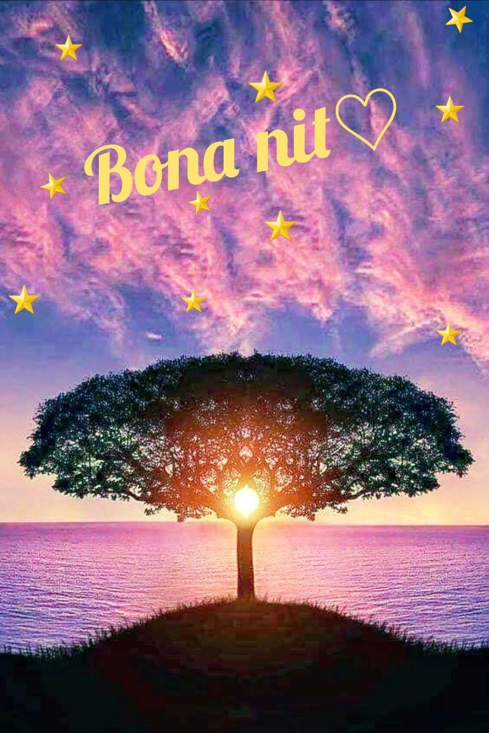Bona Nit Oración De Buenas Noches Saludos De Buenas Noches Buenas Noches En Catalan