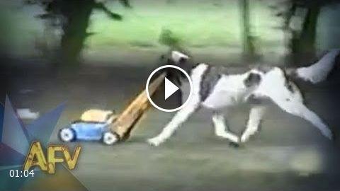 Funny Dog Landscaper Funny Dogs Afv Funny Prank Funny