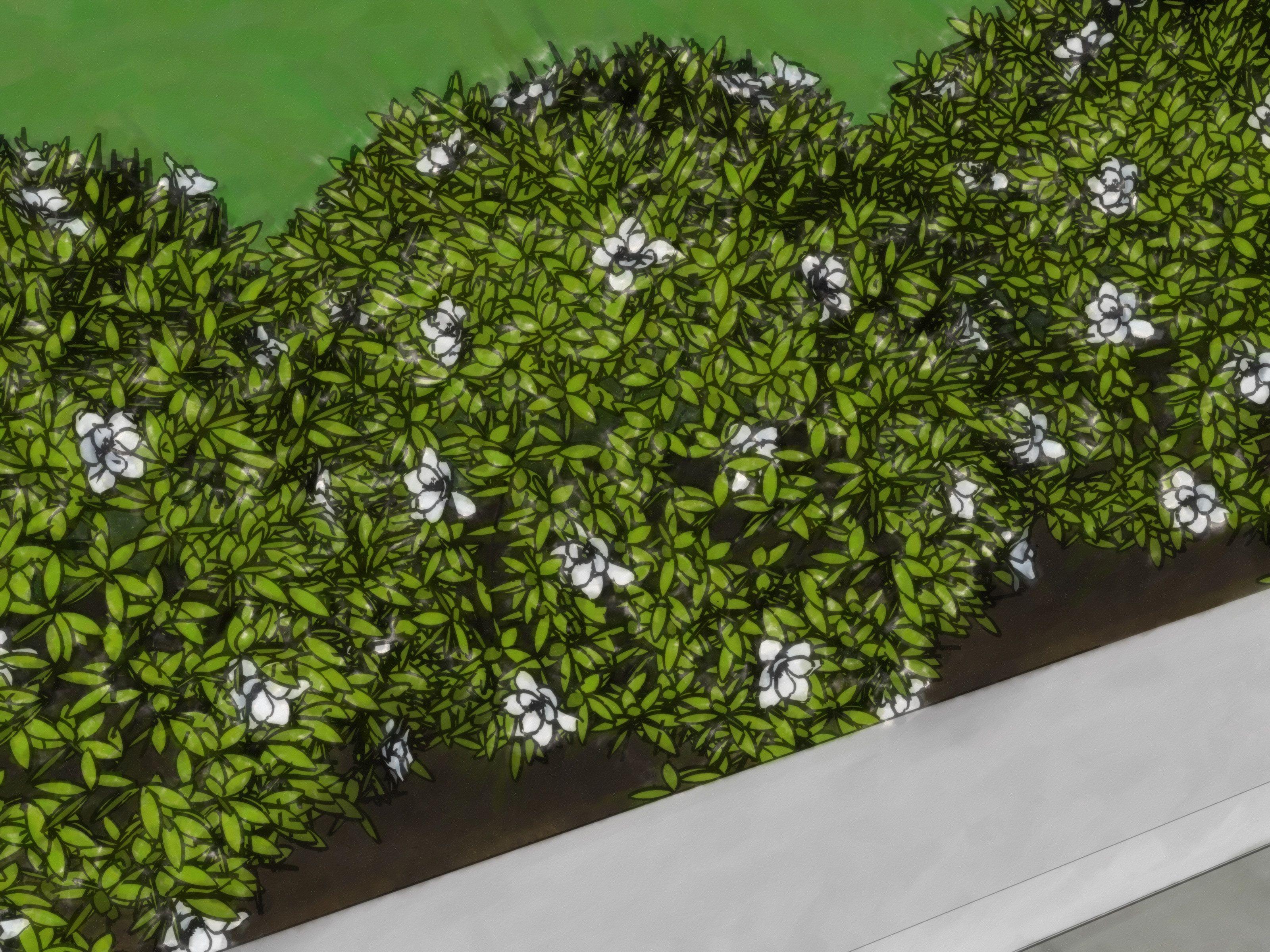 Plantar y cuidar un cerco vivo c mo comenzar un cerco for Arbustos jardin pequeno