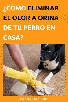 Photo of ¿Tu mascota hizo pis dentro de casa? Aprende cómo eliminar el olor de orina de perro del piso