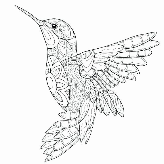 24 Bird Coloring Book For Adults Em 2020 Beija Flor Desenho