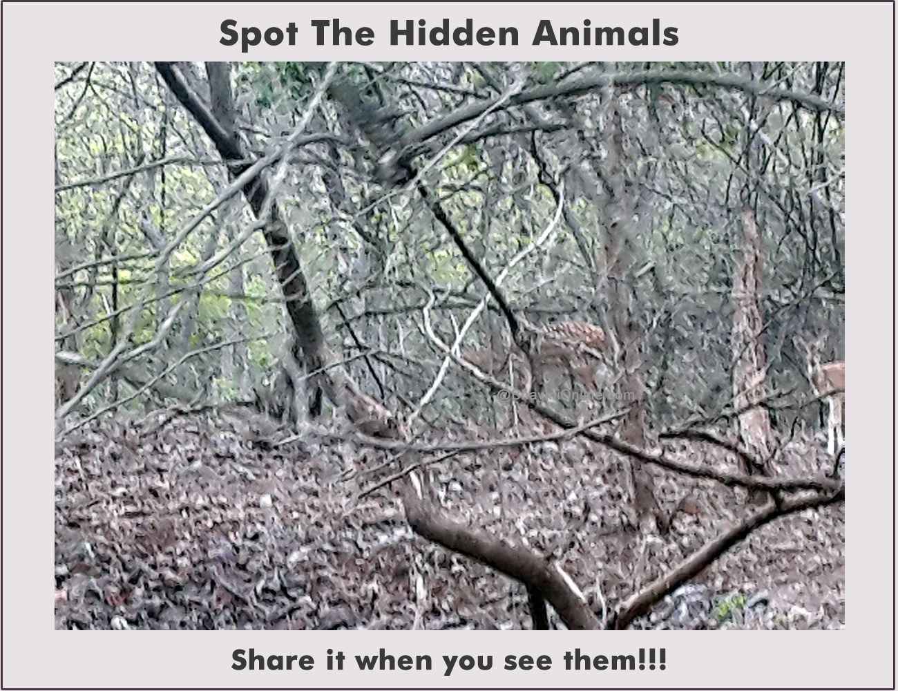 Amazing riddles about the forest 21