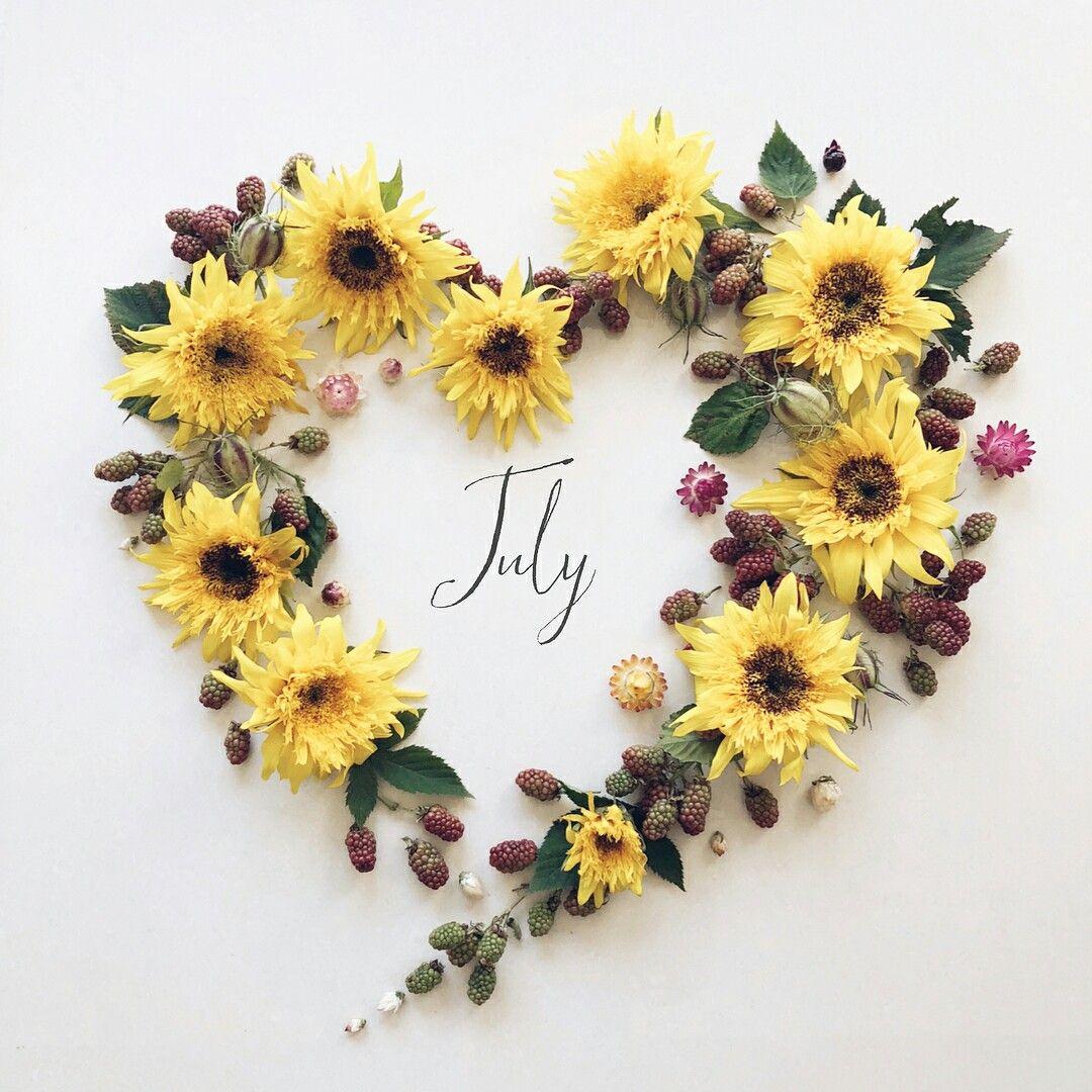 Iyul Podsolnuh Pressed Flower Art Month Flowers Flower Art