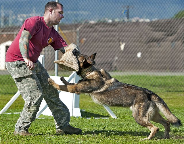 130410 N Wf272 267 Working Dogs Training Your Dog Dog Attack