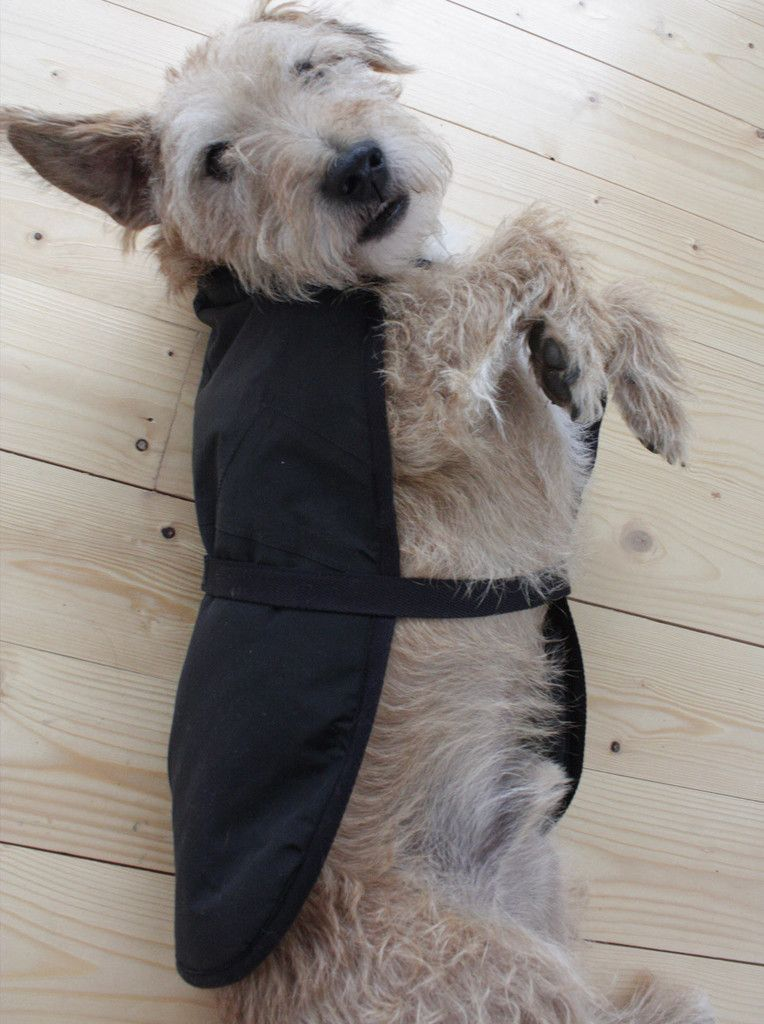 Recycled North Face Dog Coat  6eb9e91e6