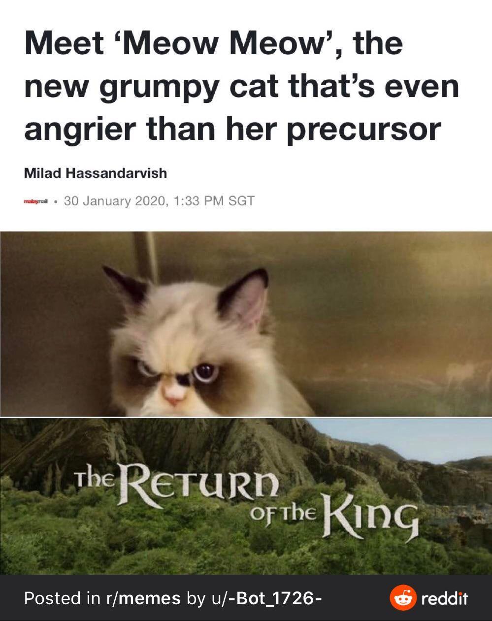 Meow Meow In 2021 Funny Memes Funny Jokes Jokes