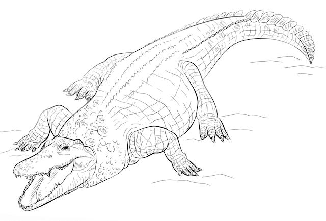 Krokodile Zum Ausmalen Ausmalbilder Krokodile Ausmalen Ausmalbilder Tiere Zeichnen