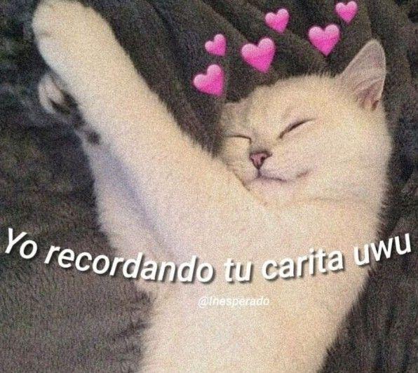 Me Encanta Este Mishiii Frases Tontas Memes Lindos Memes Romanticos