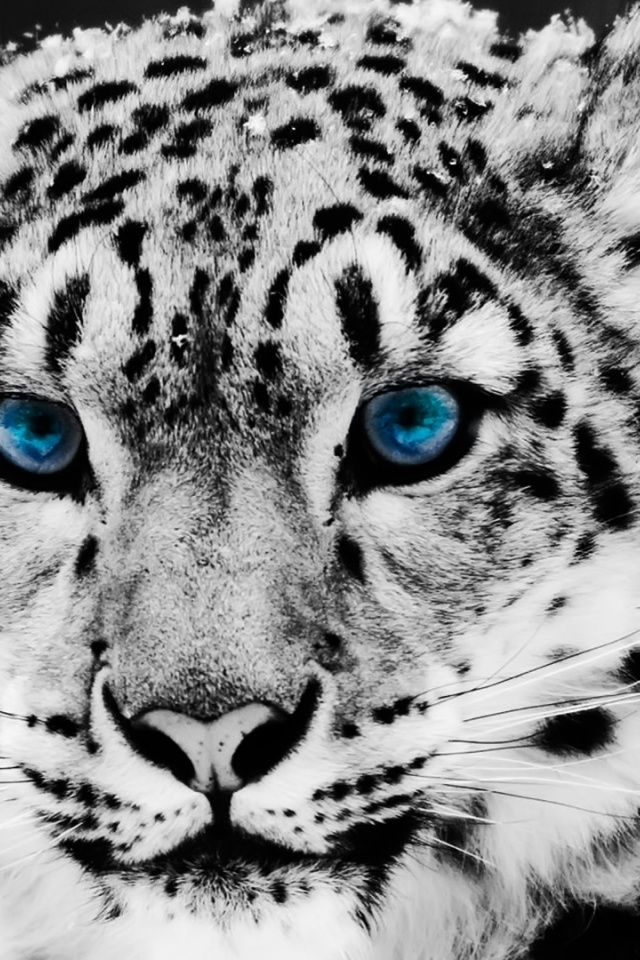 Os x snow leopard wallpapers wallpaper hd wallpapers pinterest os x snow leopard wallpapers wallpaper voltagebd Image collections
