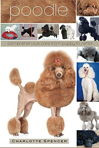 Poodle Comprehensive Care From Puppy To Senior Care Health