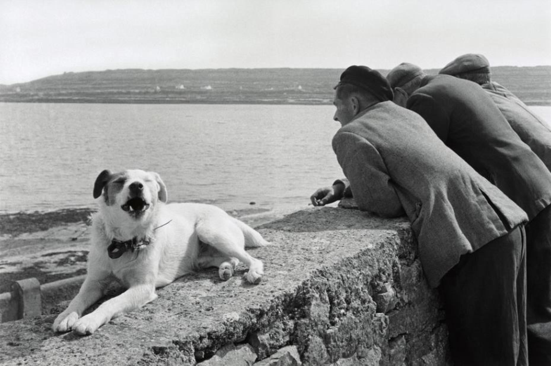 Elliott Erwitt. Isle of Aran, Ireland 1962. #elliotterwitt