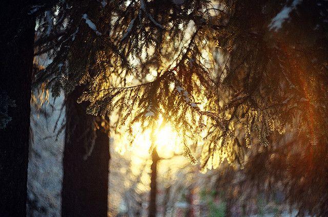 by alla nestulova on Flickr.