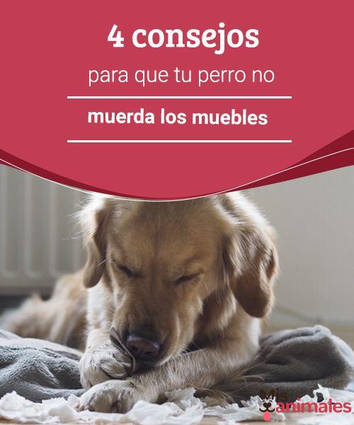 4 Consejos Para Que Tu Perro No Muerda Los Muebles Perros Entrenamiento Perros Adiestramiento Canino