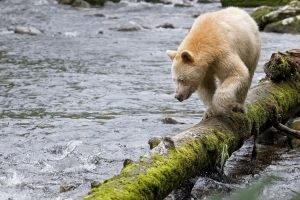Northern Gateway: not in Ontario's interest | - Environmental Defence
