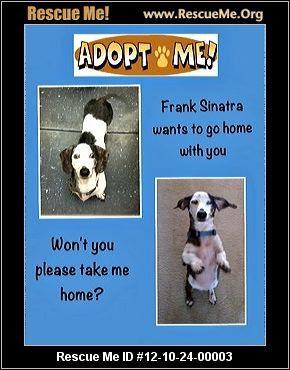Frank Sinatra Louisiana Dachshund Rescue Adoptions Rescueme