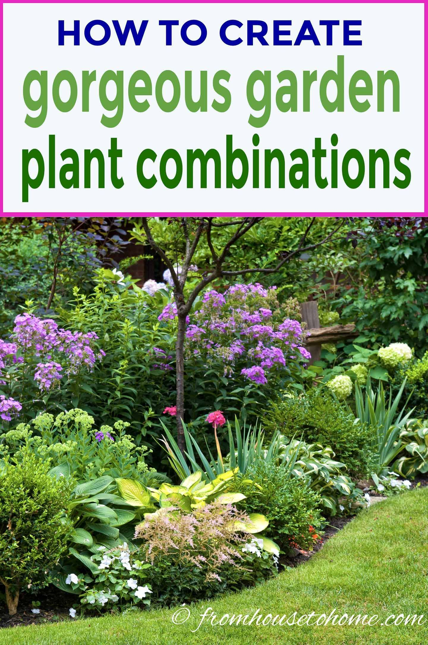 Garden Color Schemes (How To Create Gorgeous Garden Color Combinations) - Gardening @ From House To Home