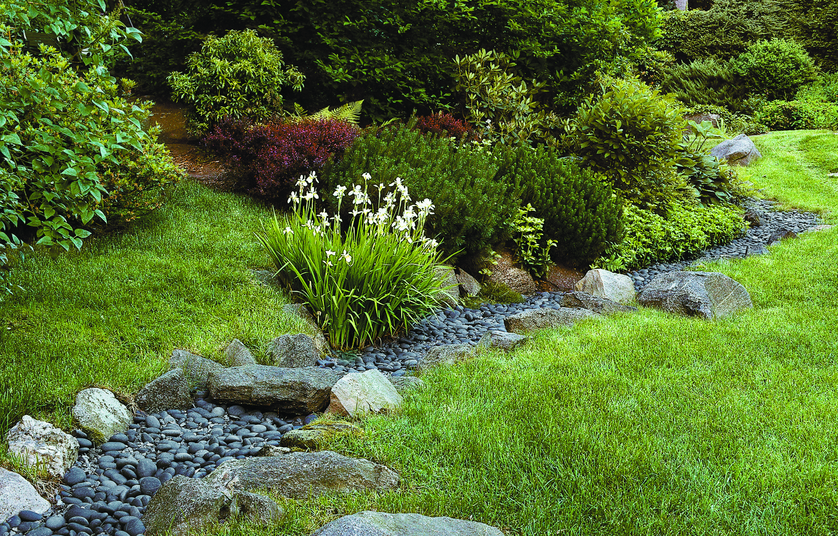 Best Ways to Deal with Storm Water (With images) | Yard ...
