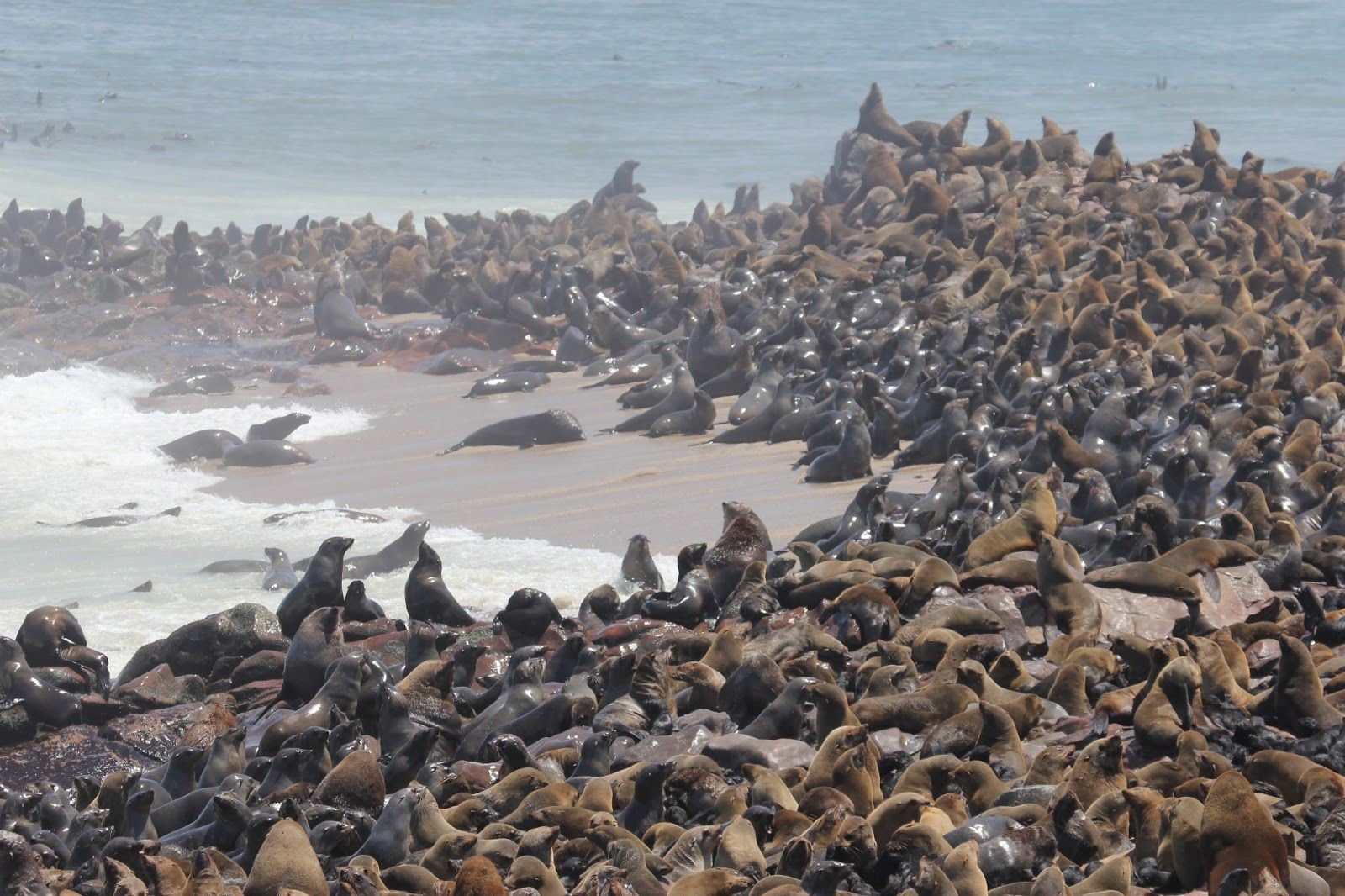 the cape fur seal colony of cape cross near swakopmund in namibia namibia beautiful places. Black Bedroom Furniture Sets. Home Design Ideas