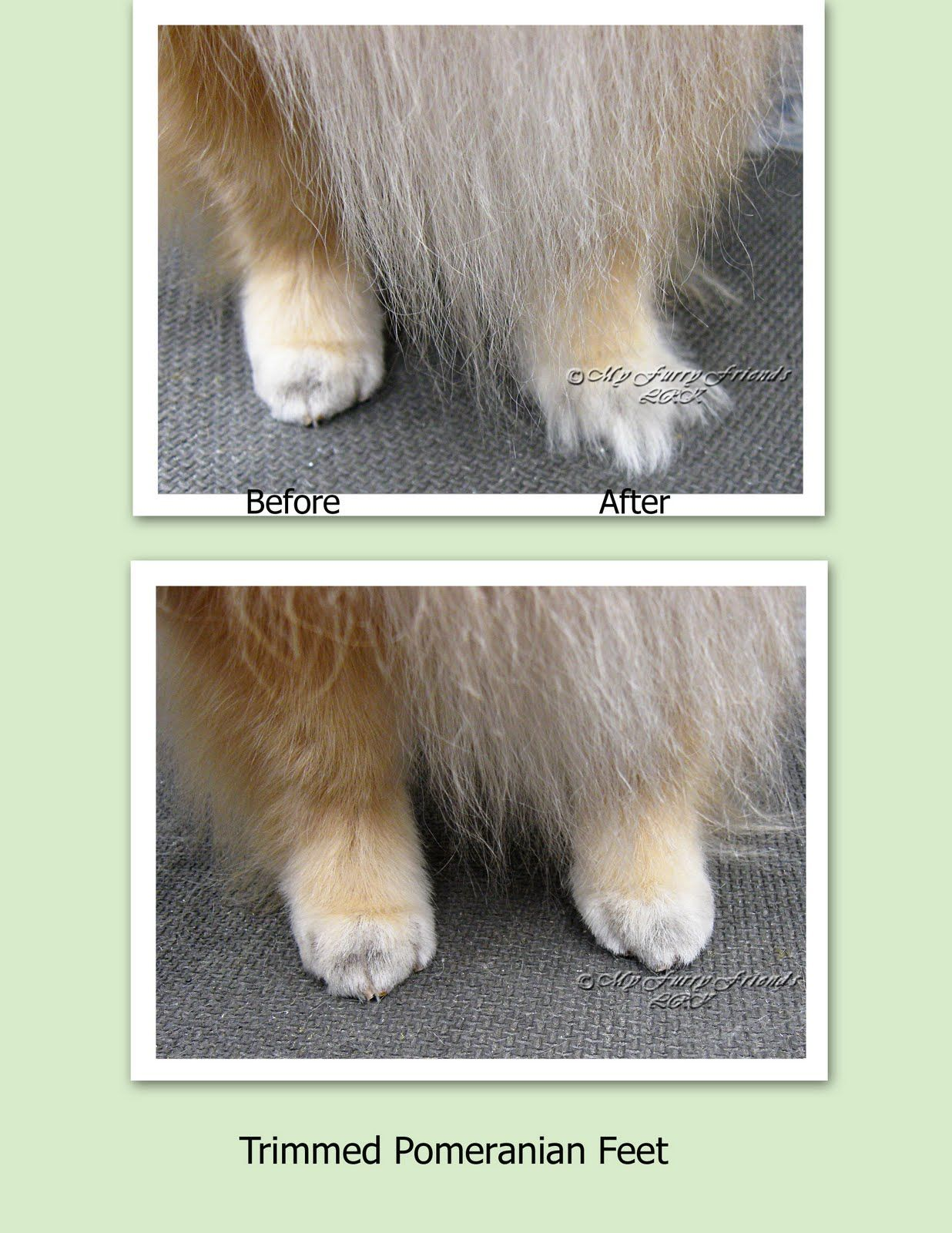 Pet Grooming The Good The Bad The Furry Tuesdays Tip 21