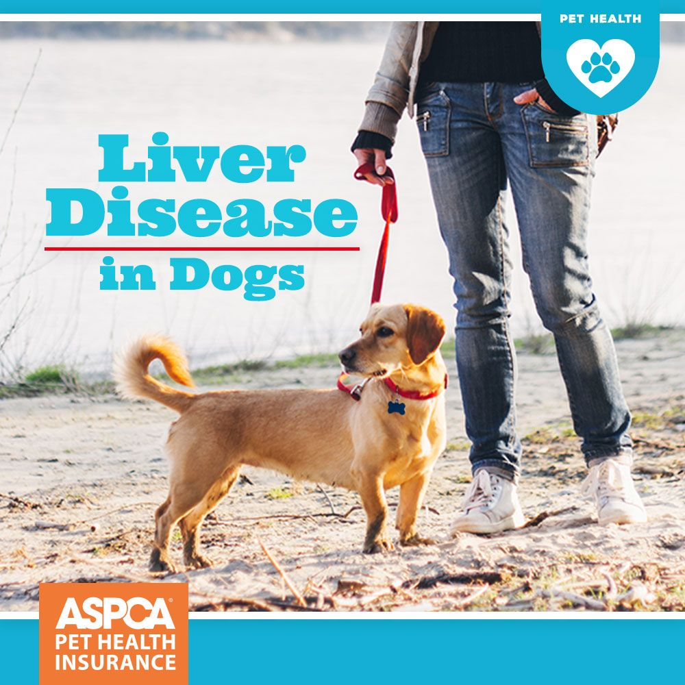 liver cancer symptoms in dogs health