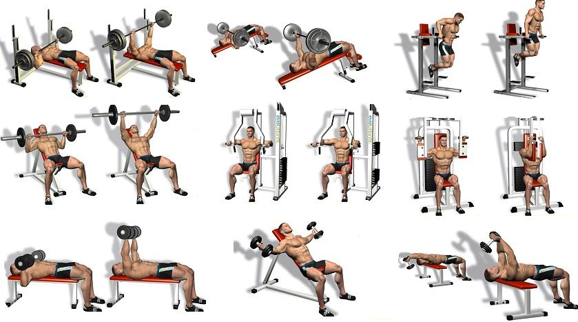 Best chest exercises workouts