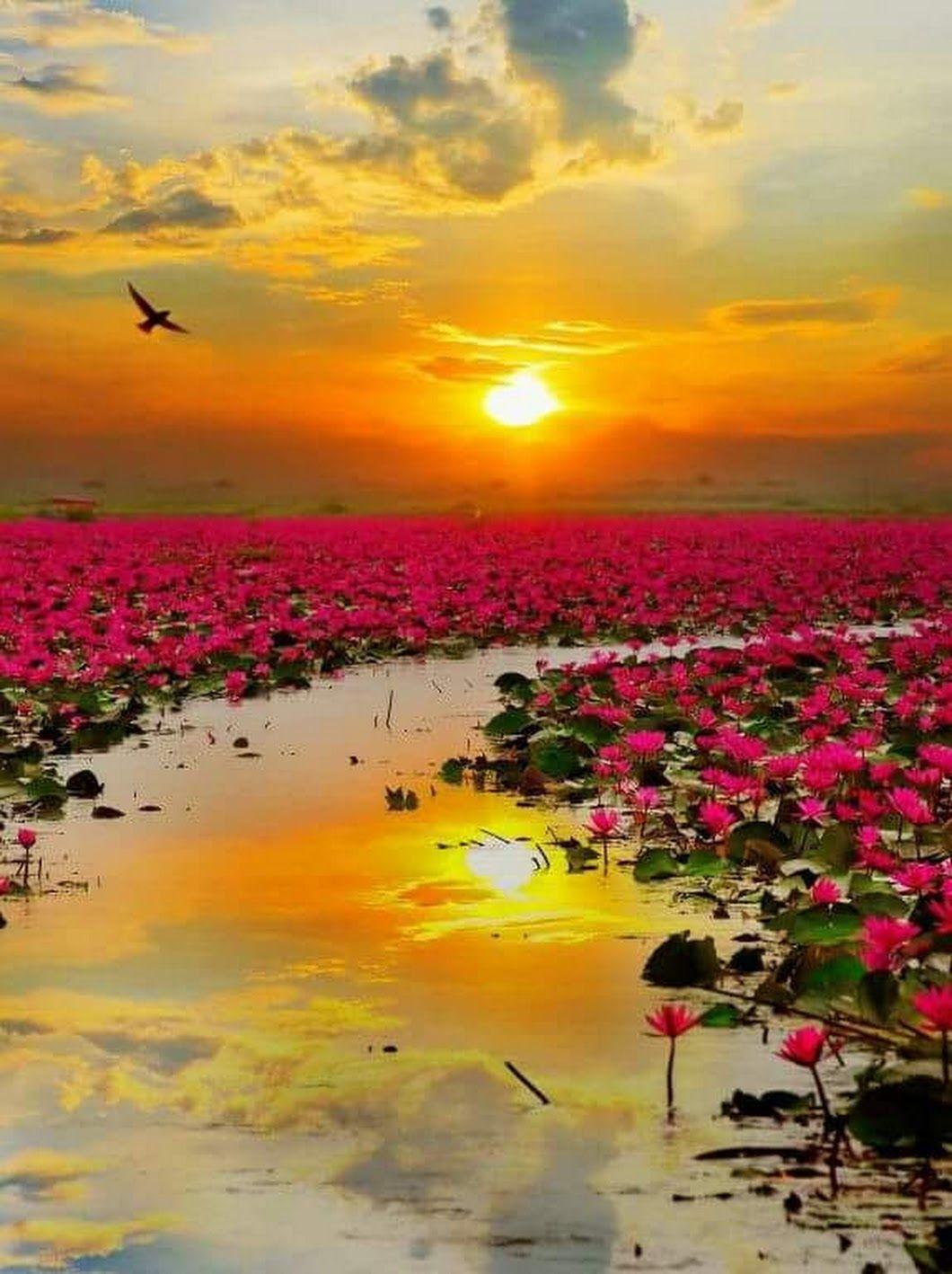 Amanecer Sunrise Beautiful Nature Nature Photography Beautiful Landscapes