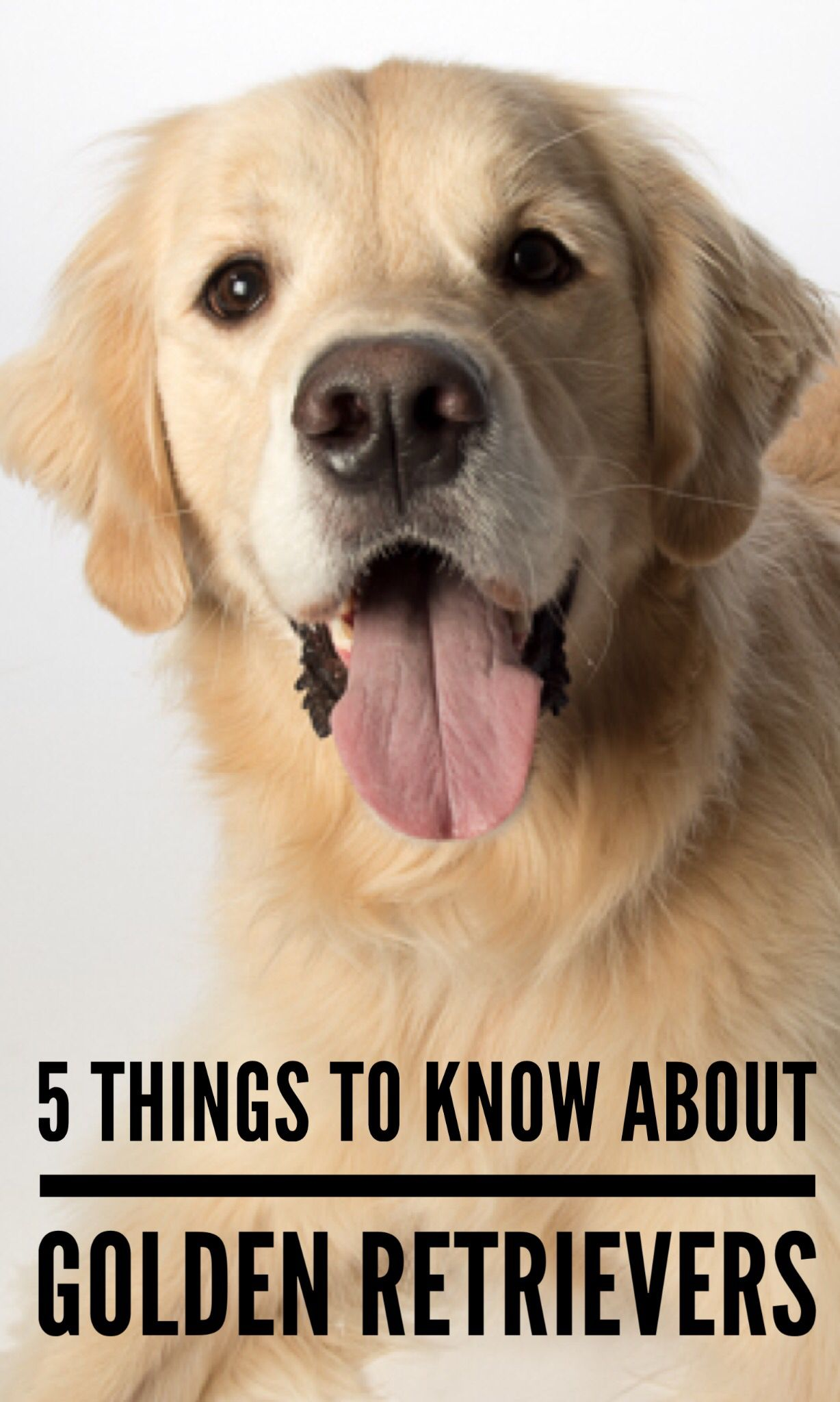 Golden Retrievers Are One Of America S Most Loved Breeds But They