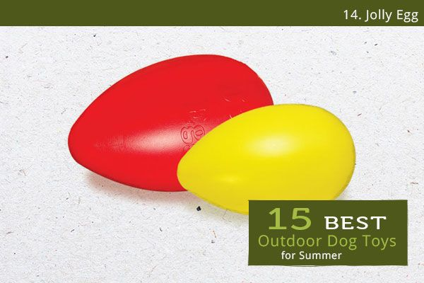 15 Best Outdoor Dog Toys for Summer Jolly Egg Outdoor