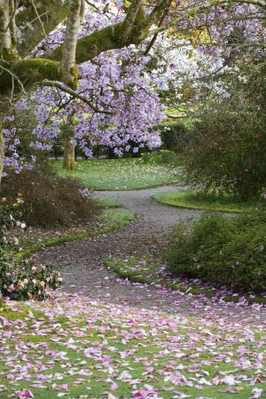 Image Details National Trust Images Garten Flowerpower Fruhling