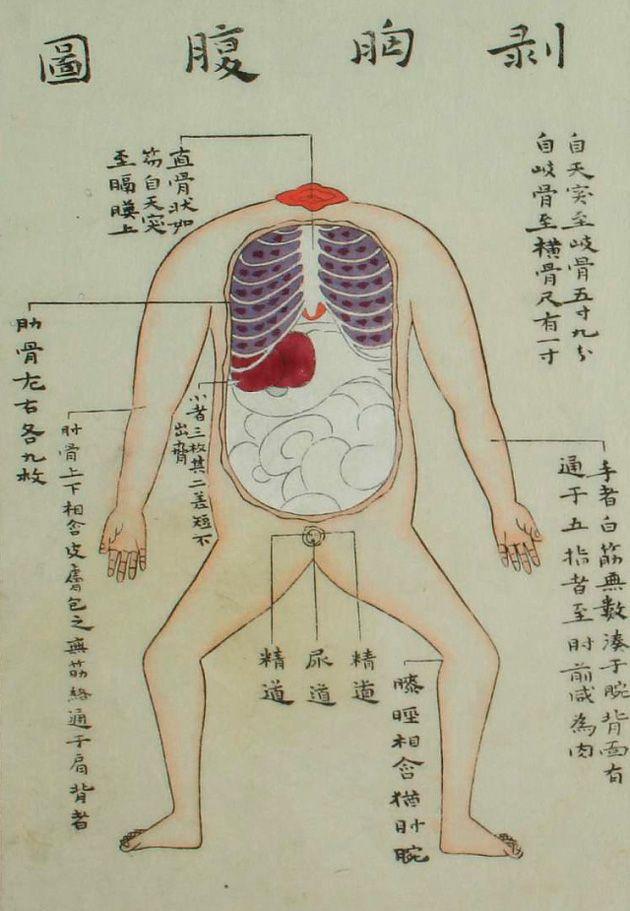 IlustracionesAnatmicasDelPerodoEdoDeJapn  Anatomy