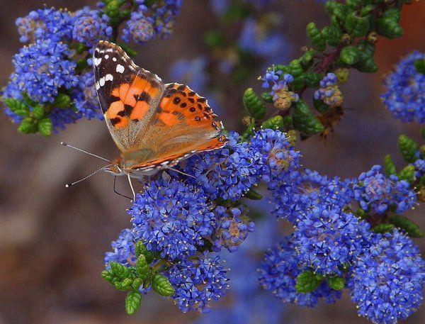 """Ceni on Twitter: """"@lynn_nich ☮❤ https://t.co/cznxl6kv0x"""" #butterflies #photographs"""