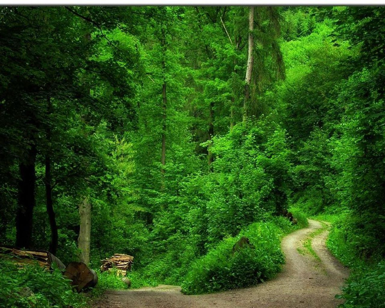 Green Forest Wallpaper   Forest wallpaper, Green wallpaper, Forest pictures