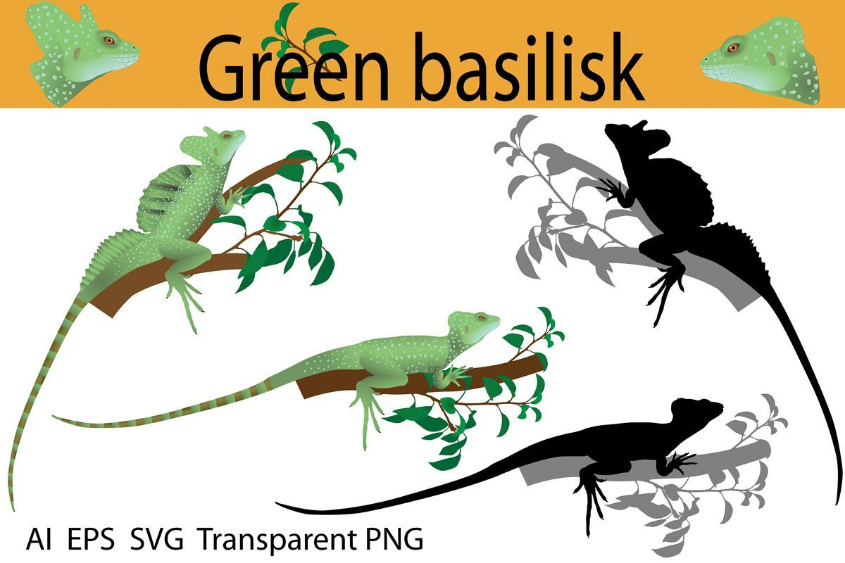 Collection Of Green Basilisk Lizard In Colour Image And Silhouette The Species Also Called Plumed Basilisk Doub Basilisk Lizard Basilisk Graphic Illustration