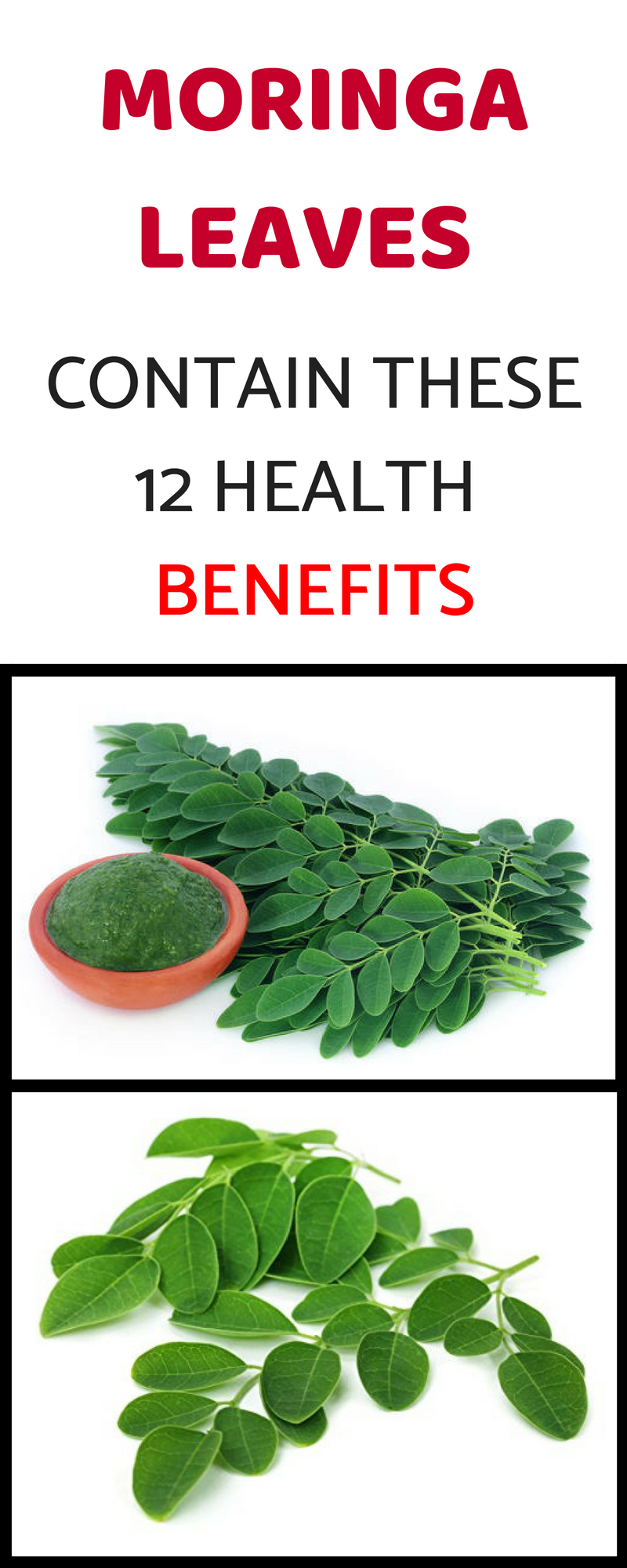 Moringa Leaves Contain These 12 Health Benefits Moringa Benefits Moringa Leaves Moringa