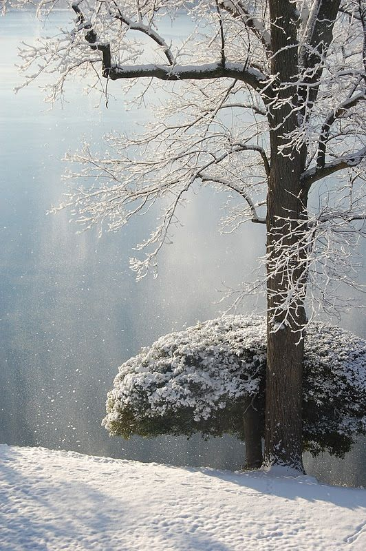 Snow Kissed