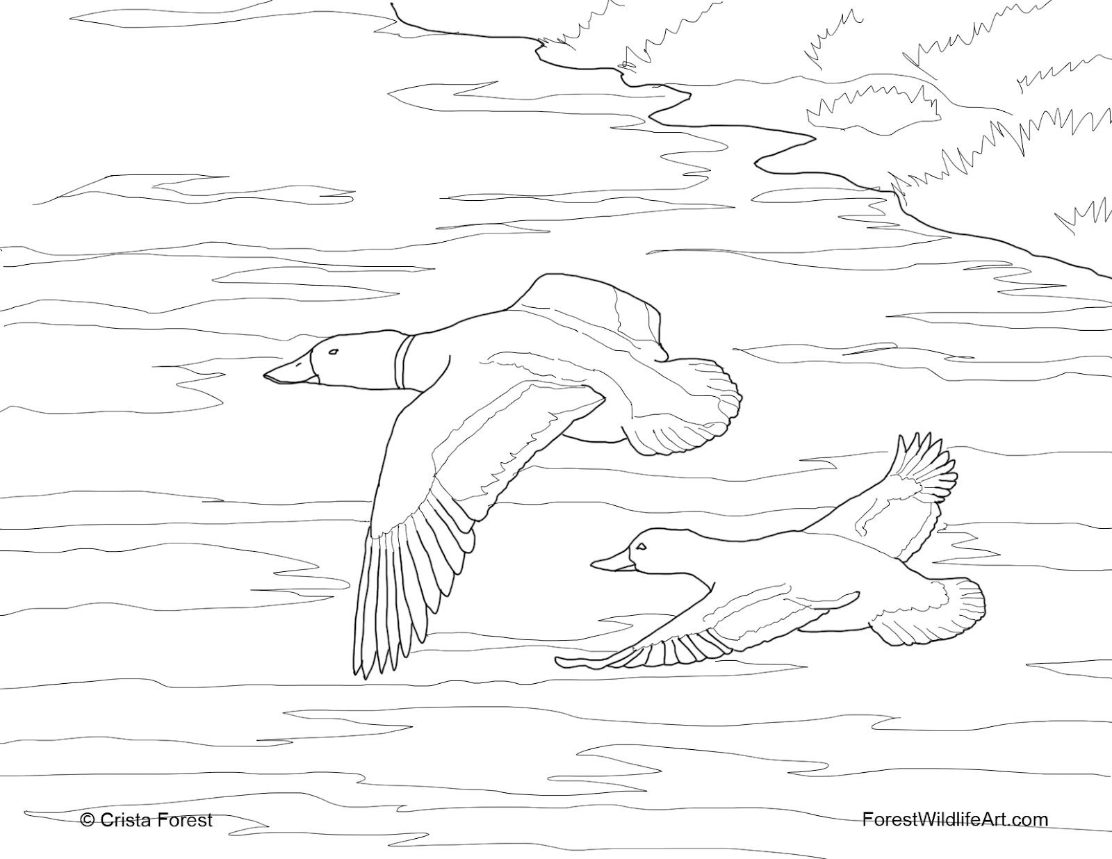 Coloring pages quebec - Find This Pin And More On Kids Nature Activities Quebec Duck Hunting Coloring Pages