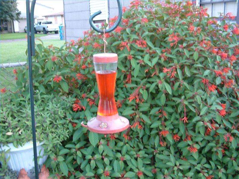 What To Put In My Hummingbird Feeder Humming bird