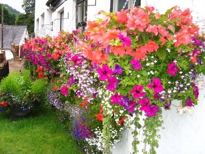 How To Attach Flower Boxes Without Drilling Holes Ehow Window Box Flowers Window Boxes Best Perennials