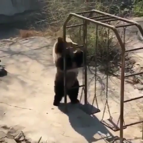 Dance Like Nobody S Looking Video Cute Animals Animals Baby Animals Funny