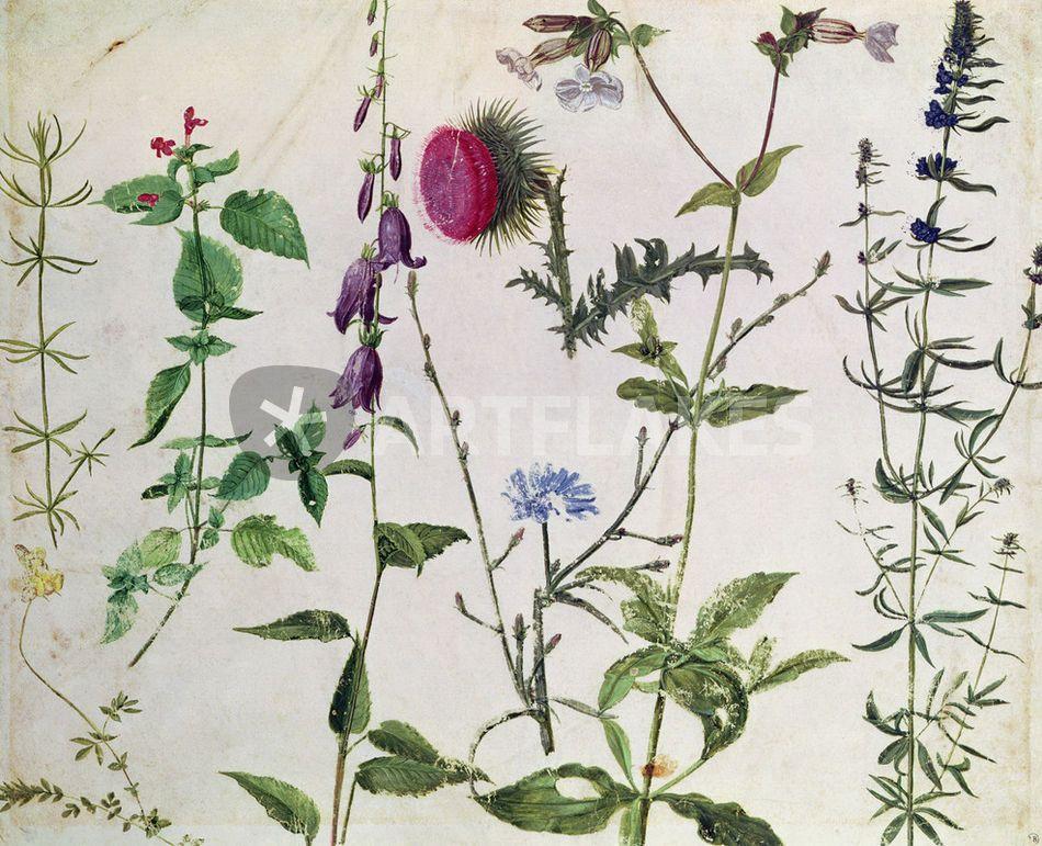 Eight Studies of Wild Flowers \