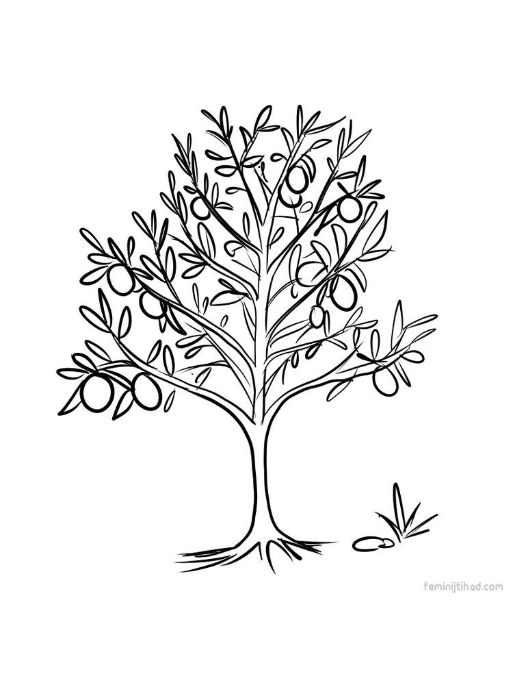 Lemon Tree Coloring Page Print Pdf Lemon Coloring Page To
