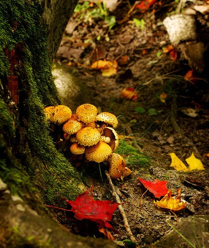 Mushrooms in a really autumnal landscape by Mack2, via Flickr