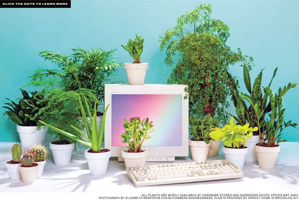Jacikessler Art Direction Office Plants You Can T Kill With Photo Editor Alis Atwell Shot By Elizabeth Renstrom