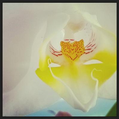 Satu Ylävaara Portfolio : Pantteri orkideassa