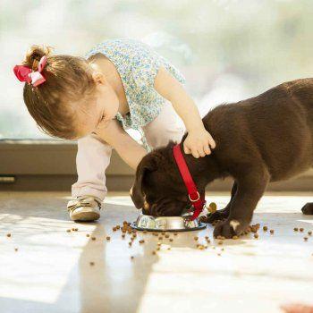 10 consejos antes de dar una mascota para los niños